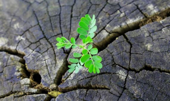Doodeerlijk: groener de grond in